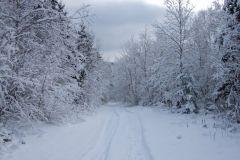 senbsa-trails-7